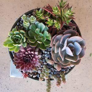 Succulent Bowl Two