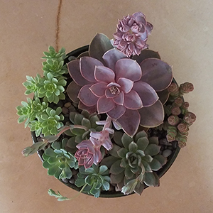 Succulent Bowl Two